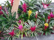 office-color-los-angeles-bromeliad-color-bowl-10