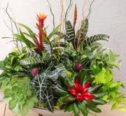 office-color-los-angeles-bromeliad-color-bowl-24