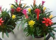 office-color-los-angeles-bromeliad-color-bowl-28