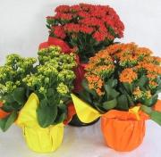office-color-los-angeles-bromeliad-color-bowl-29