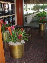 office-color-los-angeles-bromeliad-color-bowl-7