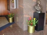 office-color-los-angeles-bromeliad-color-bowl-9