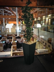 commercial-interior-landscape-los-angeles-by-yps-2