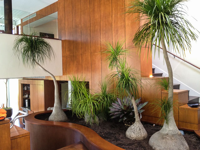 Business commercial indoor plant design los angeles for Indoor plant maintenance
