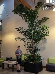 commercial-interior-landscape-los-angeles-by-yps-4