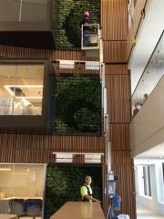 green-wall-installation-los-angeles-0201
