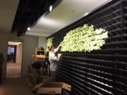 installation-interior-living-wall-los-angeles-11