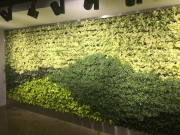 finished-living-wall-installation-los-angeles-final-3