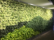 finished-living-wall-installation-los-angeles-final-5