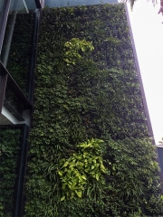 living-wall-EXTERIOR-TODD-REED-3