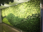 Living Wall Los Angeles, 5900 Wilshire Blvd-1