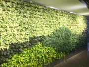 Living Wall Los Angeles, 5900 Wilshire Blvd-4