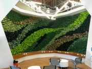 living-wall-los-angeles-commercial-interior-2