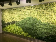 Living Wall Los Angeles, 5900 Wilshire Blvd-3
