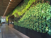 interior-living-wall-maintenance-los-angeles-at-Netflix-by-your-plant-service