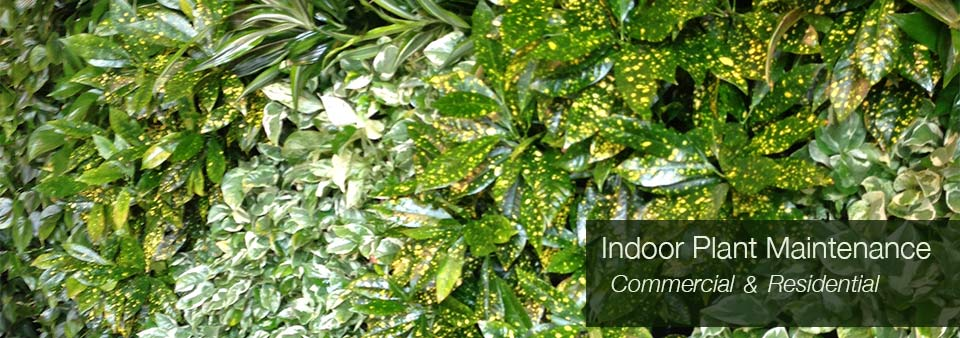 Interior plant design los angeles indoor plants for Indoor plant maintenance
