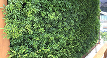 living-wall-exterior-la-feature-220w