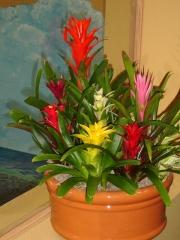 office-color-los-angeles-bromeliad-color-bowl-1