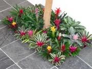 office-color-los-angeles-bromeliad-color-bowl-11