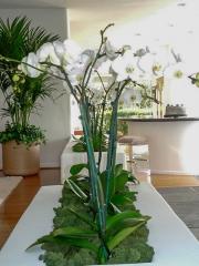 office-color-los-angeles-bromeliad-color-bowl-13