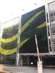 Living-Green-Wall-Installation-at-9255-Sunset-Blvd-Los-Angeles-2