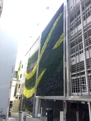 Living-Green-Wall-Installation-at-9255-Sunset-Blvd-Los-Angeles-3