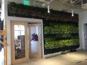 Living-Green-Wall-at-Launched-Los-Angeles-1