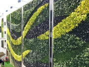 Living-Green-Wall-on-Sunset-Los-Angeles-2