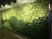 finished-living-wall-installation-los-angeles-final-1