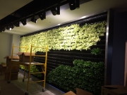 installation-interior-living-wall-los-angeles-16