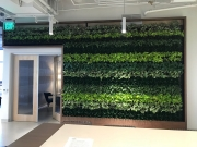 Living-Green-Wall-at-Launched-Los-Angeles-2