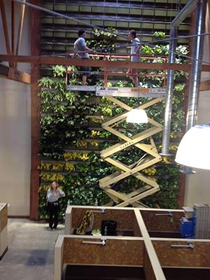Living Wall Installation Los Angeles 30 Foot Being Installed Indoors
