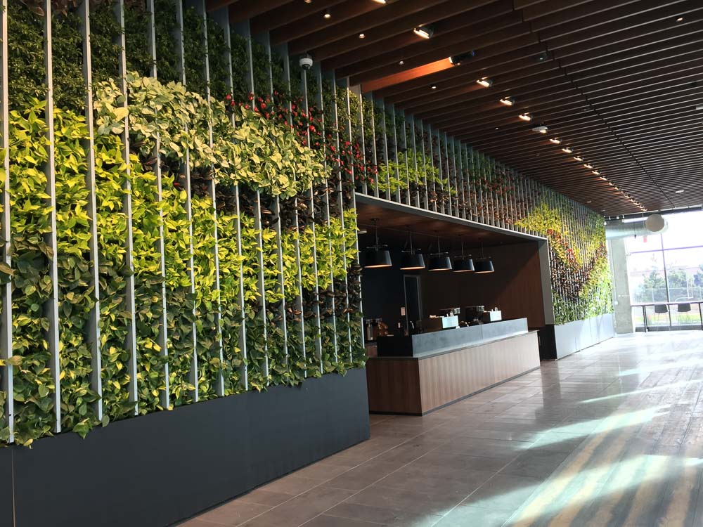 A VersaWall System Living Wall - designed, installed and maintained by YPS Botanicals in Los Angeles at Netflix